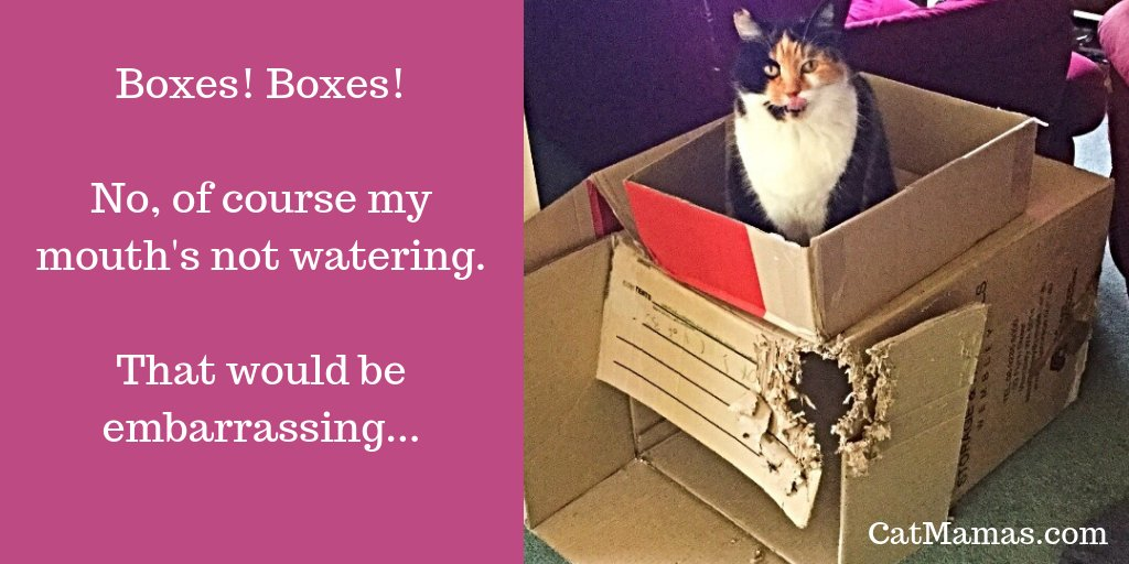 What's more exciting than a new flavour of seriously expensive #cat food? Why, a huge ugly cardboard box, of course!
