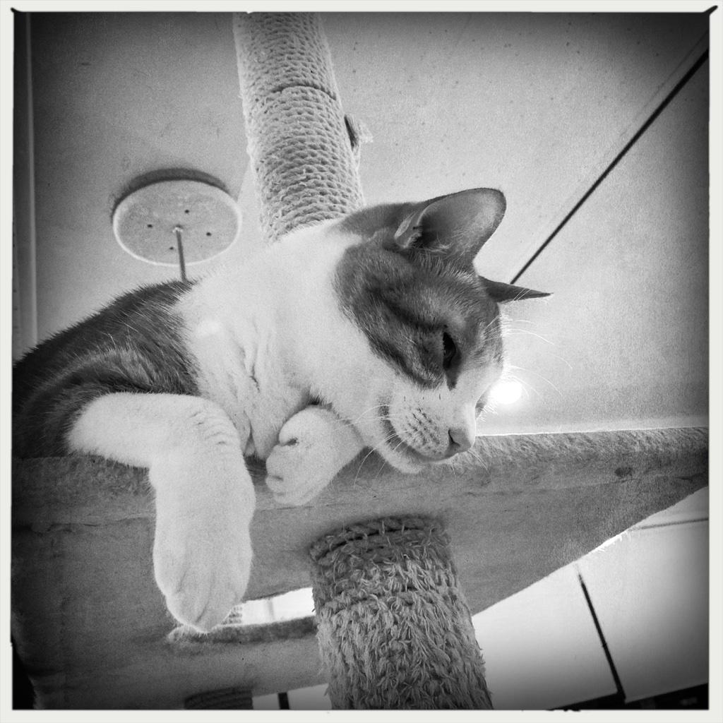 Downward confirmation. #猫式 #cat #ShotoniPhone #Ruddy #AOBW #JuicyOrangeGel  #Hipstamatic