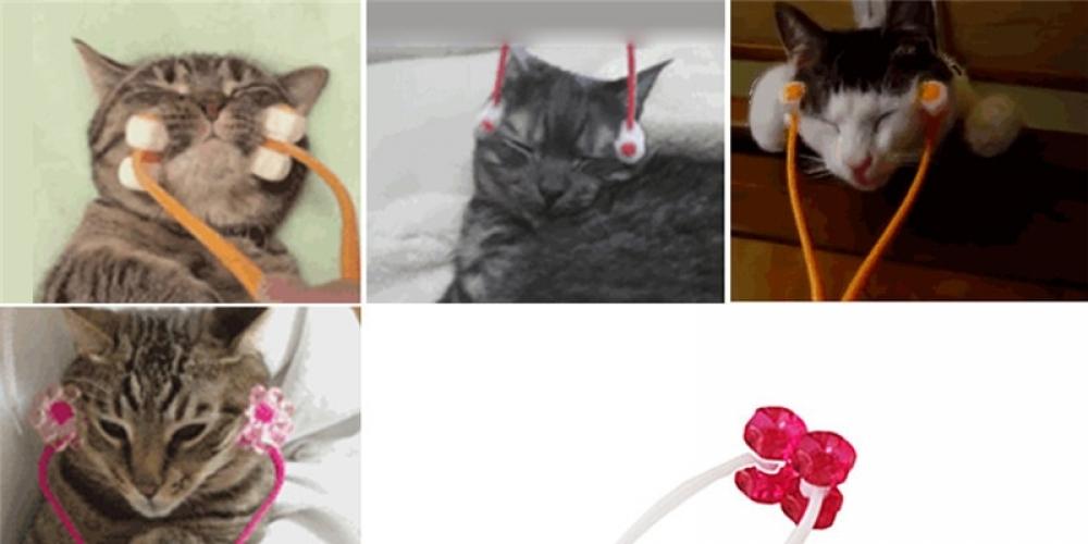 #kiubsakcom #cats #cat #caturday #catsoftwitter Cat face Massage Tool