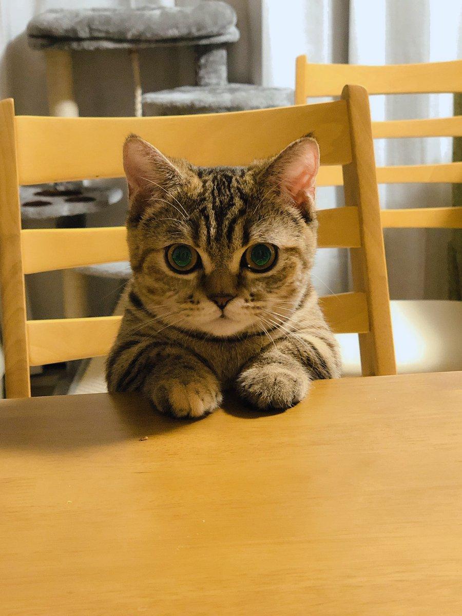 ご飯が出てくるのをいい子にして待ってますみたいな顔してるけど、そもそもそこはあなたの席ではありません