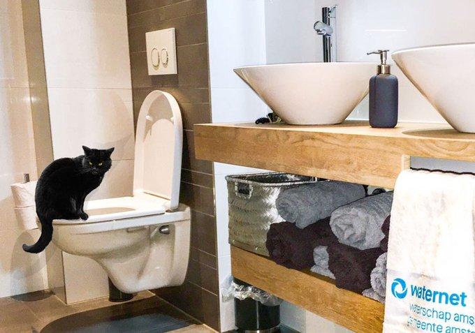 Spoel geen vochtige doekjes door de wc. Dát brengt pas ongeluk #vrijdagdedertiende #verstopping   Zie: https://t.co/LY7MfY4rrM