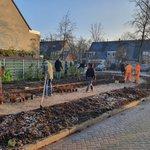@VermeulenGroen aan het werk in de bomenbuurt Bleiswijk @Lansingerland. Het rooiwerk en het plantvak voorbereiden is door de aannemer gedaan. Leerlingen van @csmblesewic hebben onder toezicht, nieuwe planten ingeplant. Mooie praktijkervaring voor de toekomstige vakspecialisten!