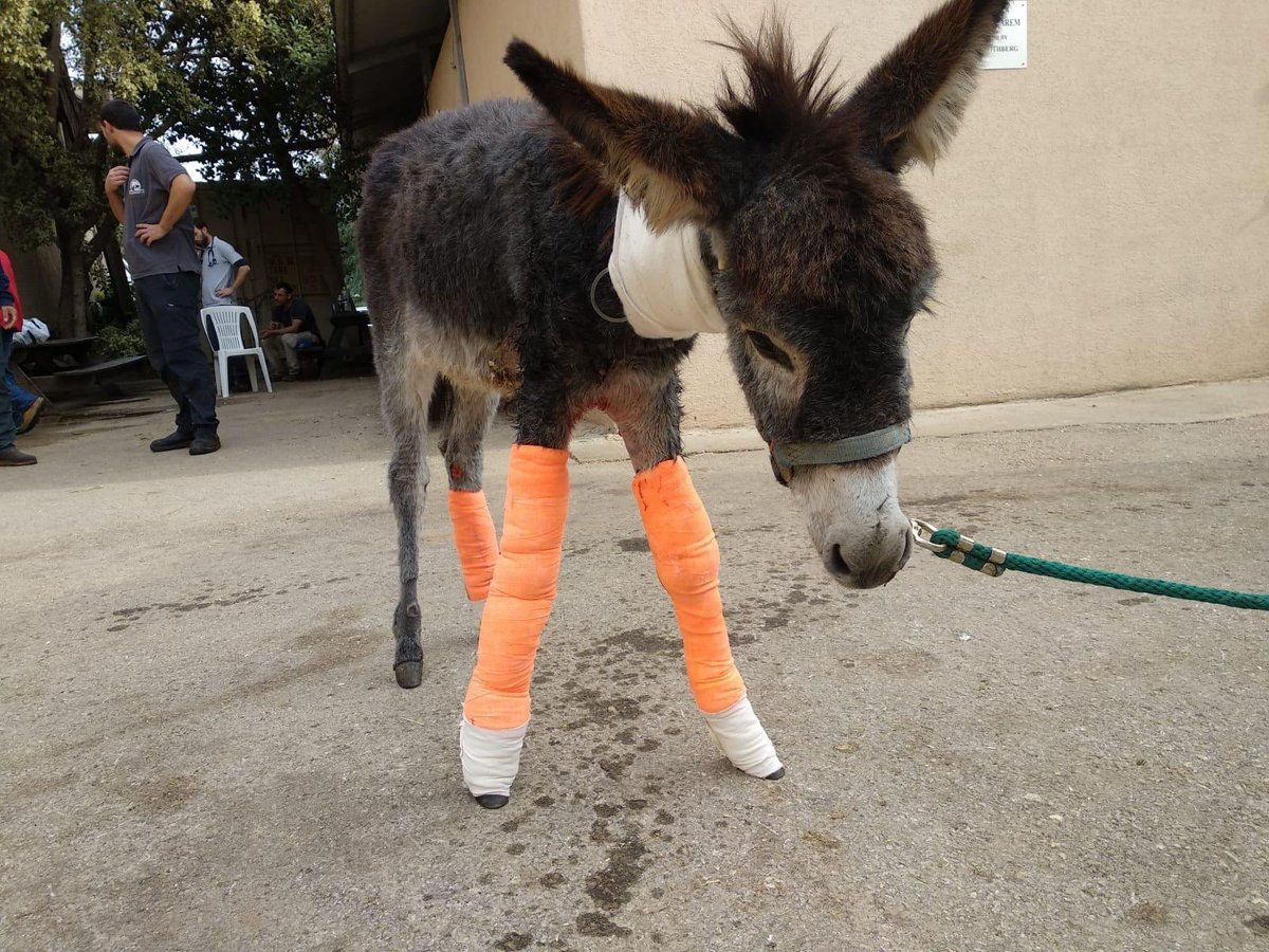 Hooray Chance is standing up bless him. We are all rooting for him from all over the world. Thanks for caring so much. Donkeys deserve better  <br>http://pic.twitter.com/Pu0bbdVmll