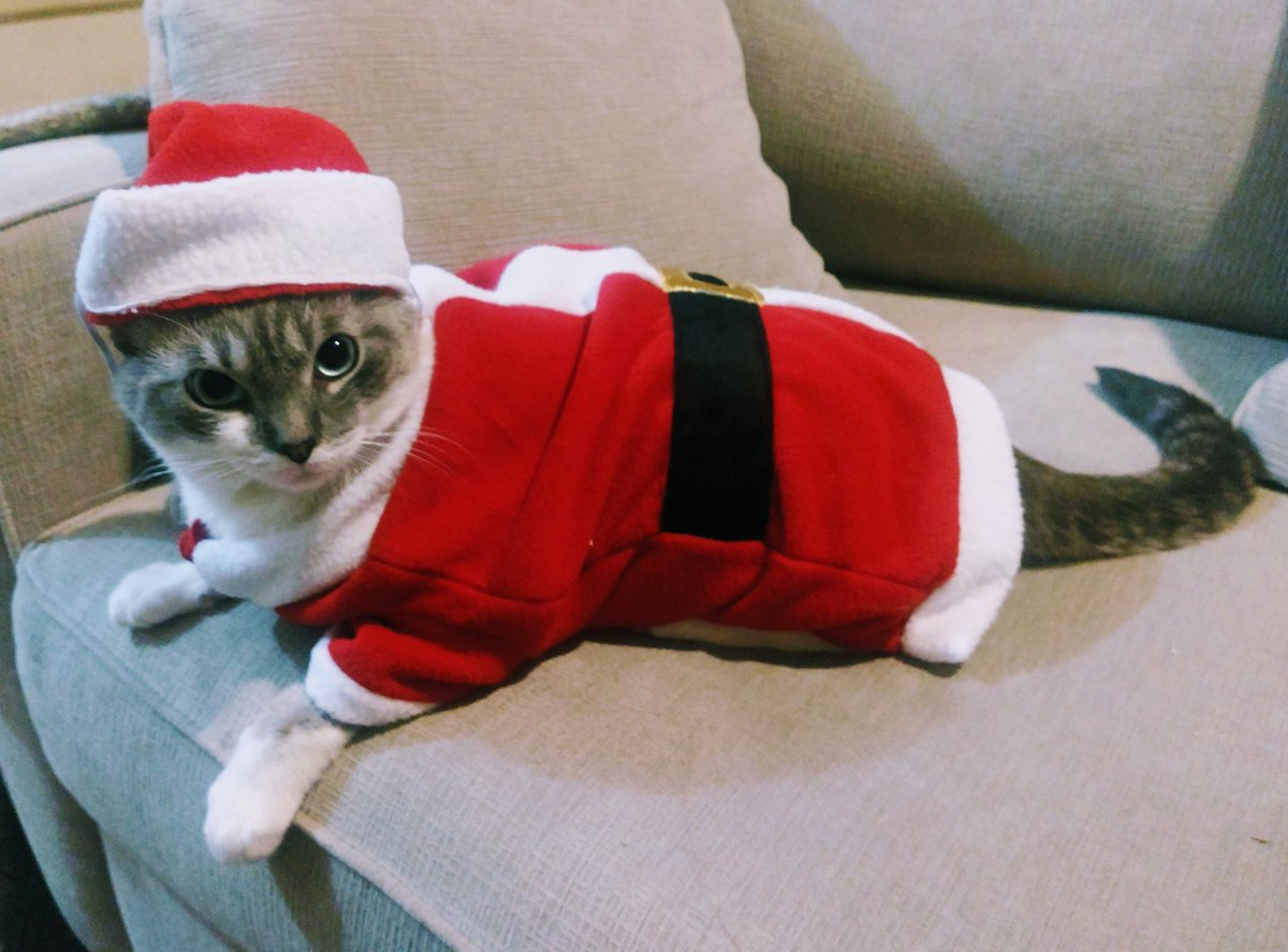 Furends!!!! Guess what?!?! Santa Paws is REAL!!!!!! #friyay #CatsOfTwitter #jellybellyfriday<br>http://pic.twitter.com/6uMhd08Mpq