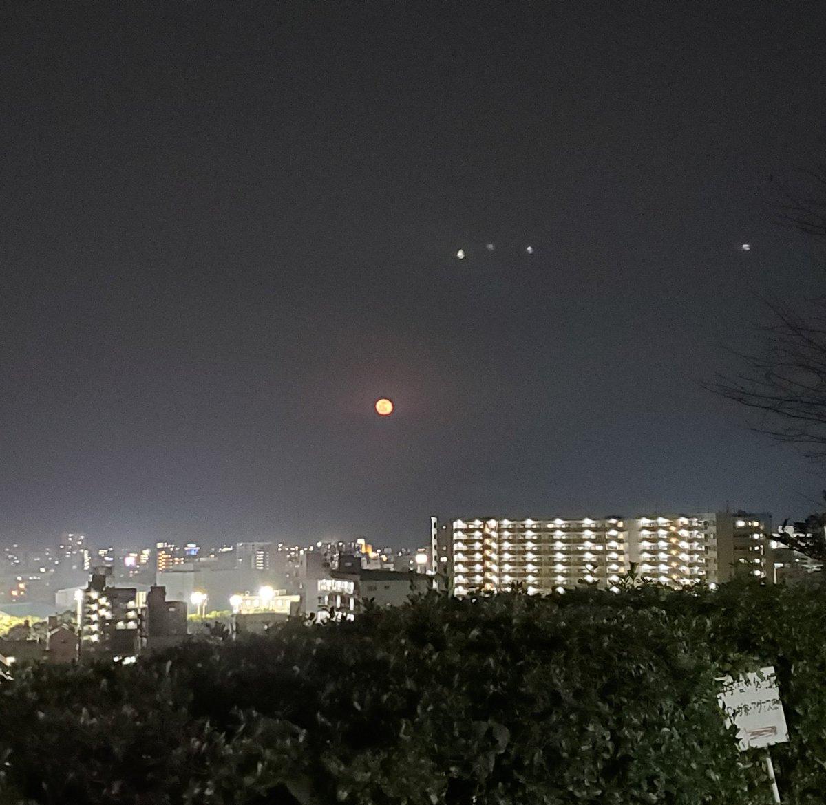今日の赤いお月様に  ハナさん大興奮でした  #ノーフィルター