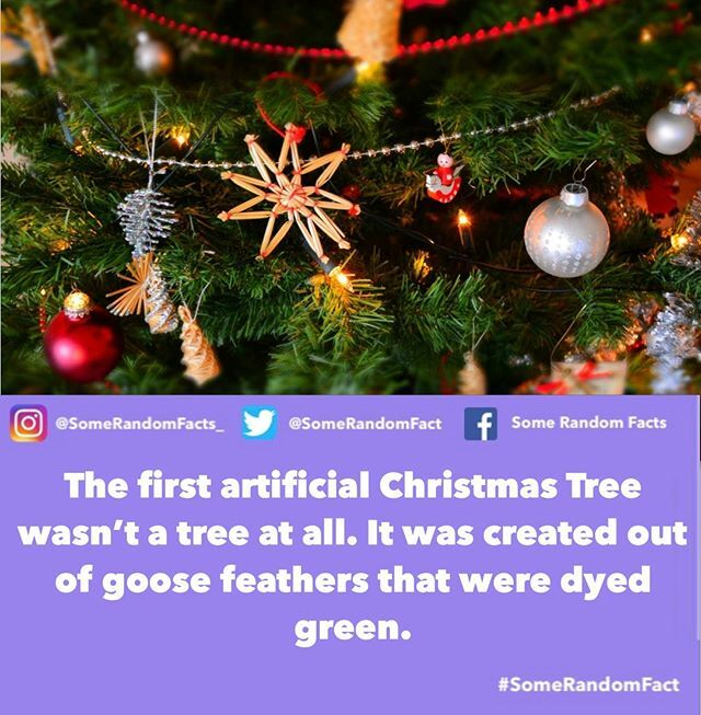 Tag someone who didn't know that.⠀⠀⠀⠀⠀⠀⠀⠀⠀——⠀⠀⠀⠀⠀⠀⠀⠀⠀⠀#facts #SomeRandomFact #didyouknow #animals #lifefacts #animalfacts #dailyfacts #wildlifephotography #naturefacts #nature #lifefacts #humanfacts #december #christmas #xmas #christmastrees