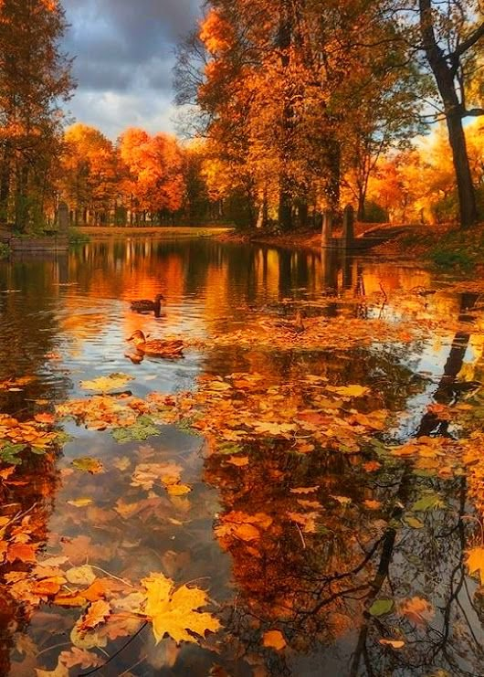 Beautiful Nature  Autumn in the world is a very beautiful  <br>http://pic.twitter.com/DqVhOWpDu5