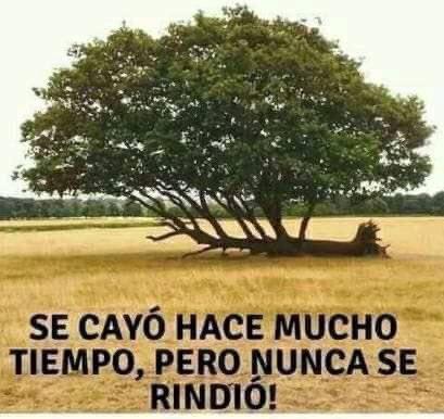 #BOLIVIA LIBRE!!!!  #QuienSeRinde #NadieSeRinde   #BoliviaLibre #BoliviaUnida #pititas #pititatwittera<br>http://pic.twitter.com/NvWVE9gh4r