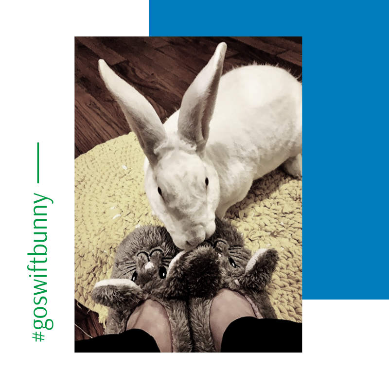 Look at ALL the bunny fun! What could be cuter than our very own Swift Bunny mascot? #fridayfun <br>http://pic.twitter.com/zYrDetsLwy