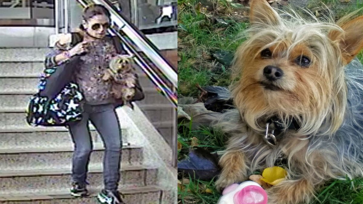 Toronto police are looking for a woman who allegedly stole a dog after its owner suffered a medical episode http://cp24.to/OdDZsdk