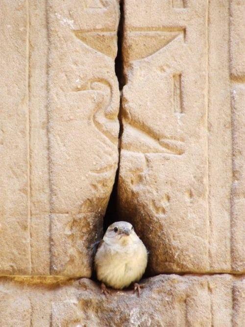 壁画に身を寄せる小鳥達。側の鳥の絵ともマッチして、壁画と同化したようで面白い。