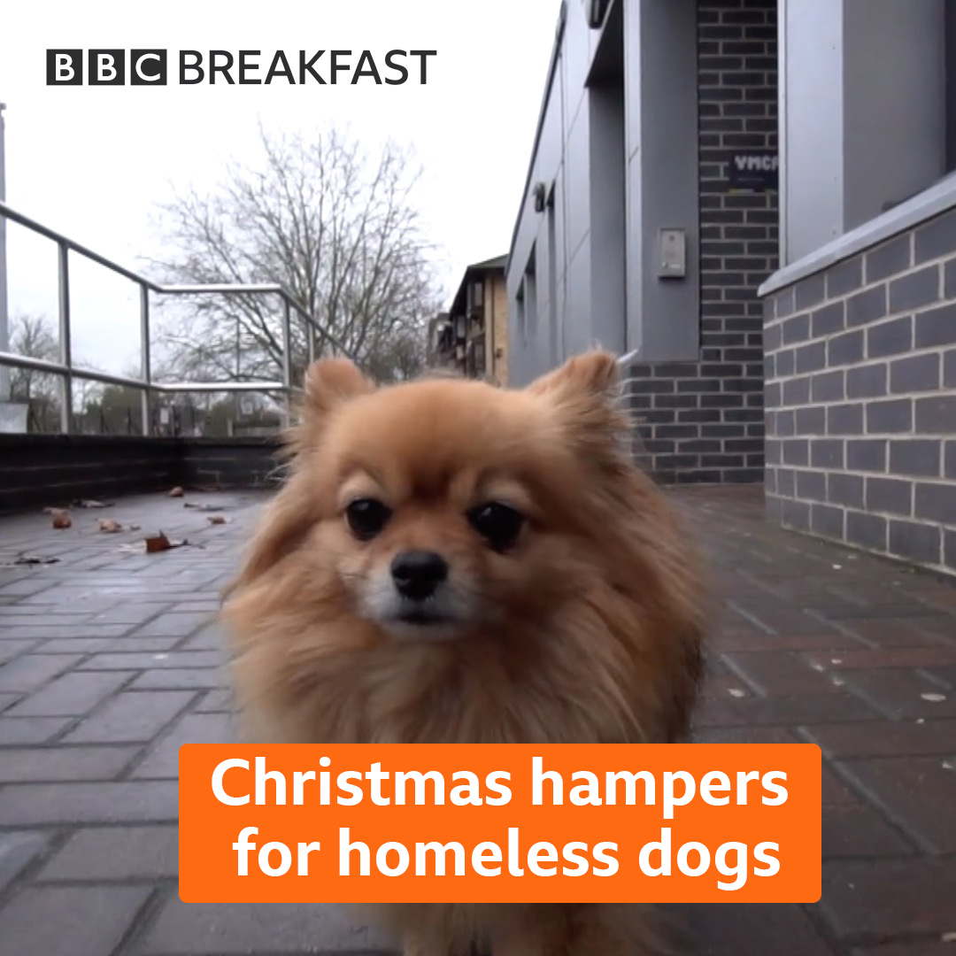 Laylas owner Mustapha lost his job and his home... but she never left his side 🐶❤️ This year @DogsTrust is delivering more than 1,700 hampers to help homeless people care for their dogs over winter