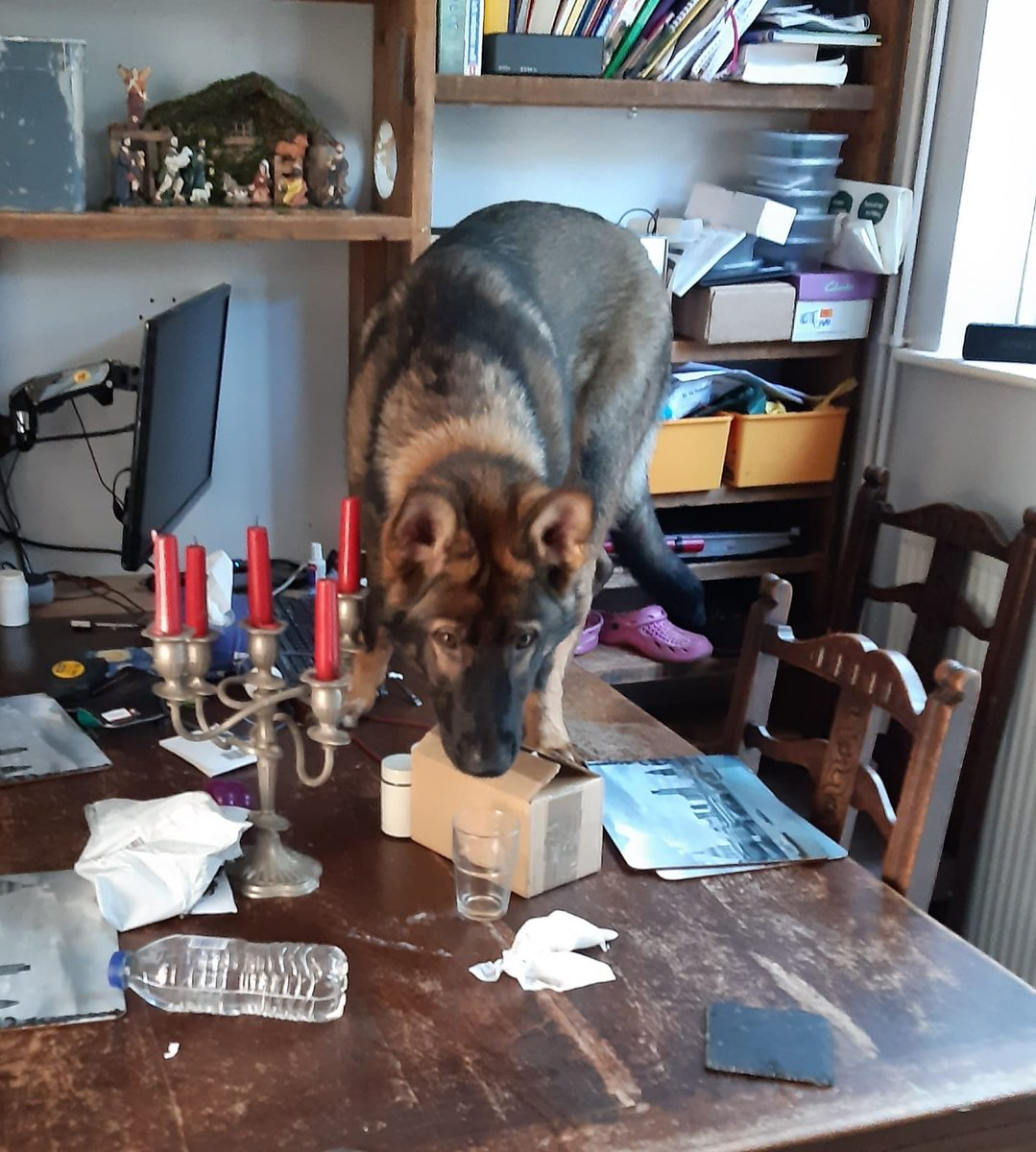 The mystery of why TPD Floyd climbed on the table to attack a parcel containing a wheel camber alignment tool is solved. Simon plays games where he hides toys & bones in cardboard boxes which he then dismantled.<br>http://pic.twitter.com/NRj4cVcjH4