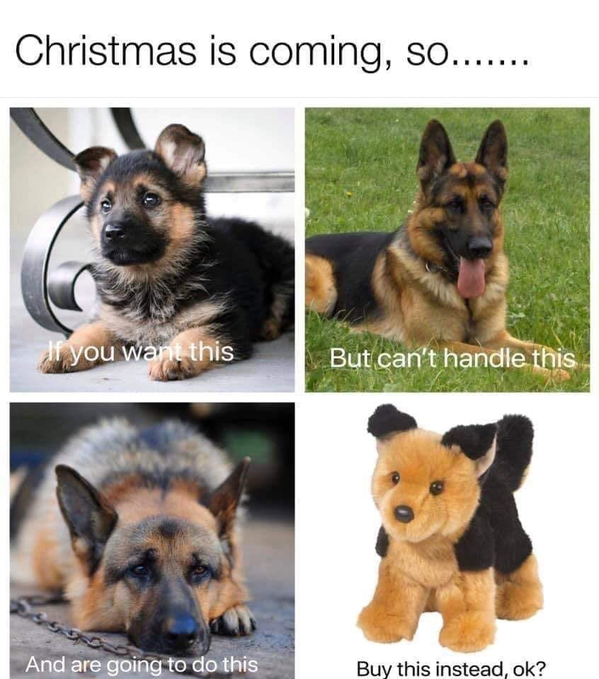 Dogs are for life, Not just for Christmas!    <br>http://pic.twitter.com/LMxMOocL3l