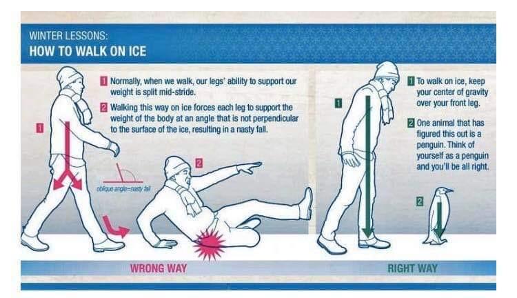 Helpful! #ice #slipperywet #Falling #injury #nature #natural #animal #design #logic