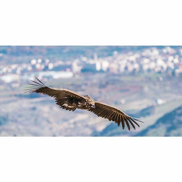 Negre, el cel tapat, per cicles infinits, de mirades desorientades. . #tremp #pallarsjussa #viujussa #catalunya #catalunyaexperience #descobreixcatalunya #ig_catalonia #catalunyagrafias #igerscatalonia #wildlife #wildlifephotography #birdphotography #bir… https://ift.tt/2sq8DMkpic.twitter.com/DhkpmYxXqU