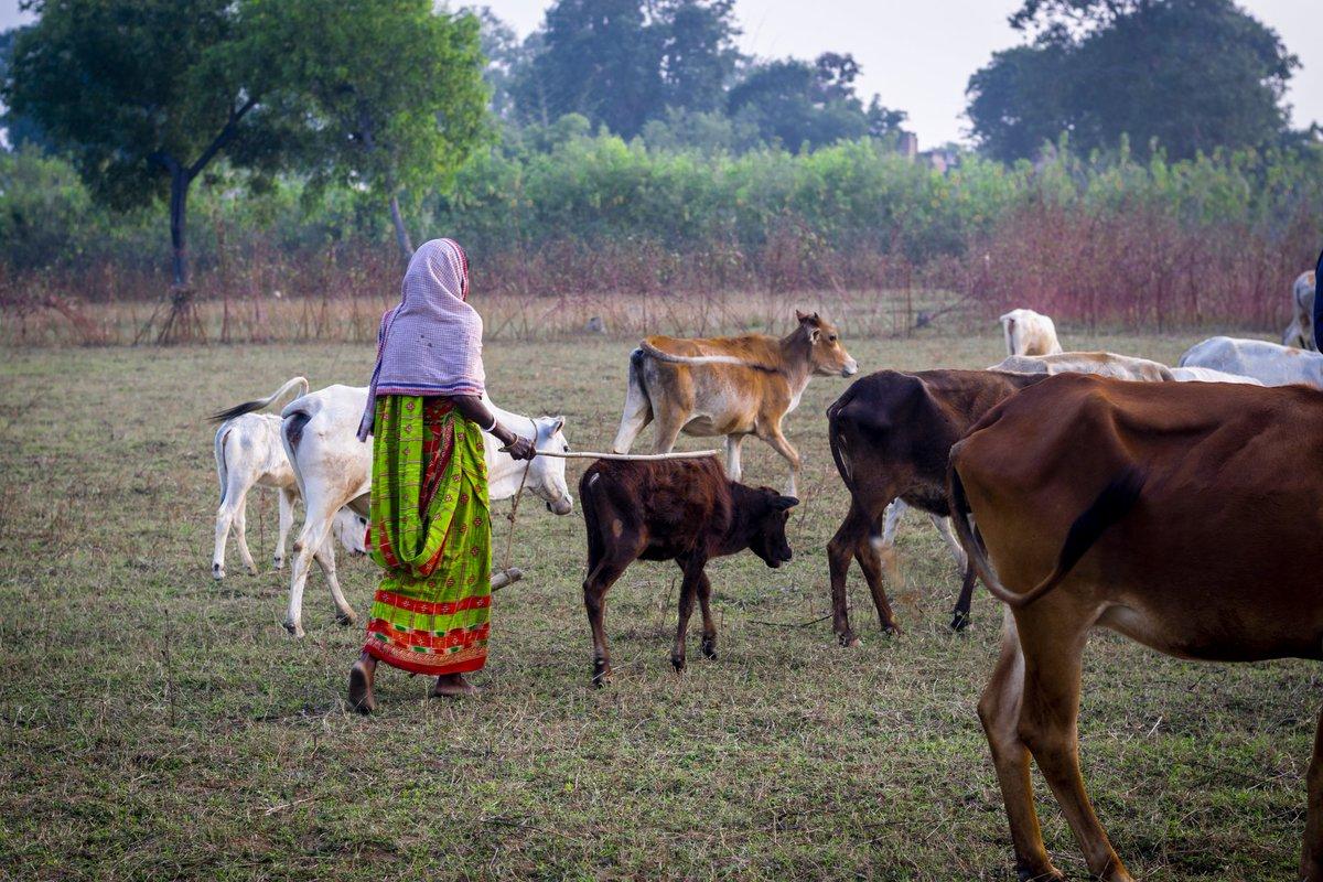 #Purulia #travelgram #india_gram #dslrofficial #thepicta #instacanvasind #onlyinbengal #photographers_of_india #indiaclicks  #theconversationcreater #yourshot_india #insta_click #f4fofficial  #dslrindia #indianphotography #_woi  #_soi #globe_people #people_infinity_ #golpo_dadupic.twitter.com/dtRee8ESSj