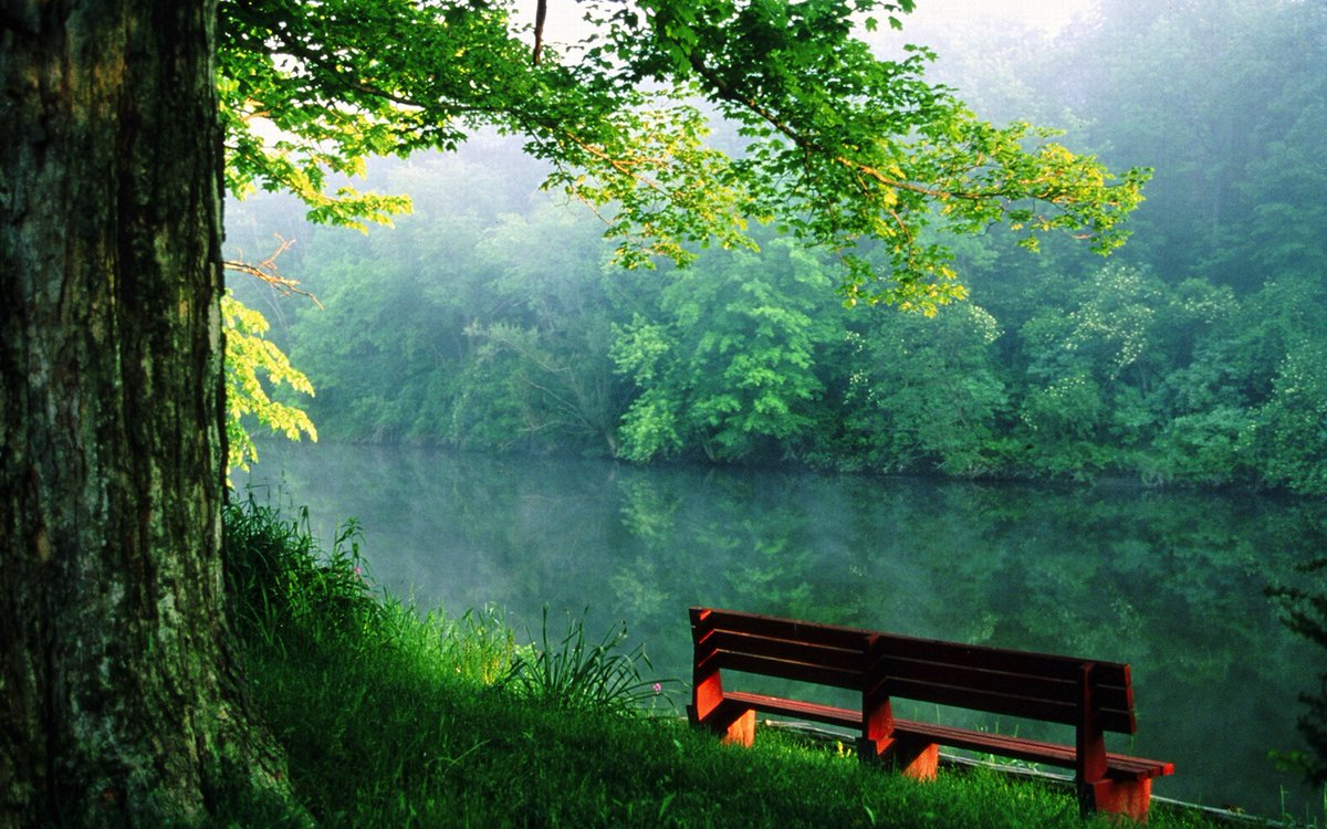 Beauty is everywhere: A bench was put there by someone who has experienced a memory they want to share.