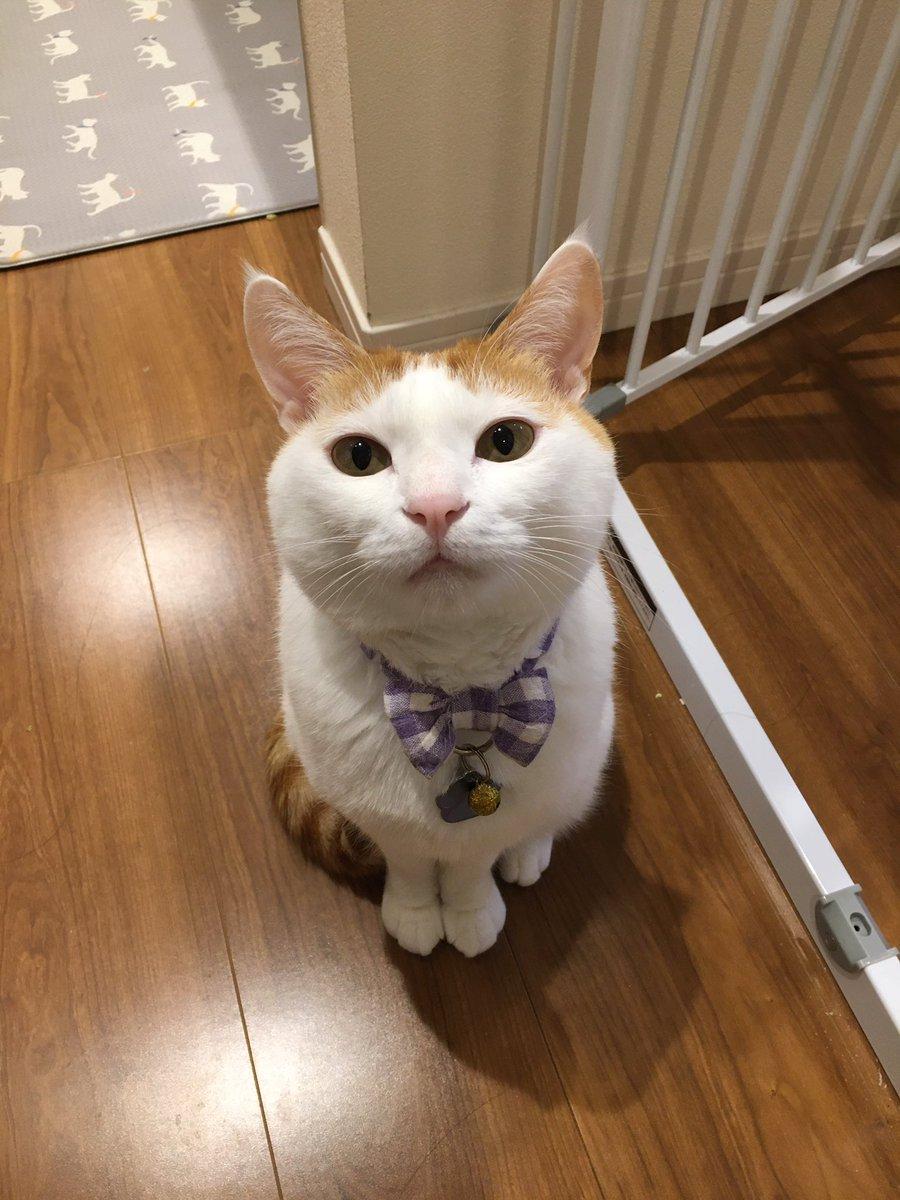 猫のこのおててがちょこんってなるアングル好きなんですけど分かる人いませんか?