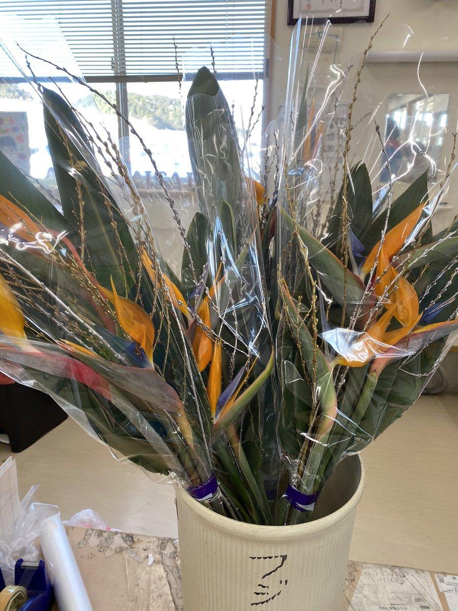 本堂の正月のお供え用に #極楽鳥花 を買いに @愛菜館 へ。  足を伸ばして西国観音31番札所の #長命寺 さん参拝し、人気スポットの #シャーレ水ヶ浜 にも立ち寄ってきました☕  #ストレリチア