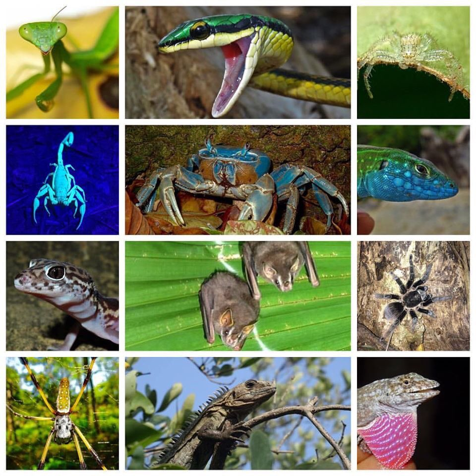 Utilas #wildlife! Just a snapshot! Come and visit our beautiful biodiverse island in #honduras! #caribbean   #hondurasisgreat