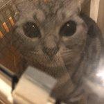 拡散希望「迷子猫預かっています。」赤い首輪をつけていて、人懐っこいです。お心辺りある方はご連絡下さい。