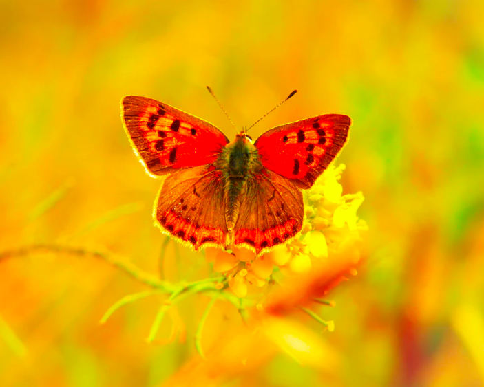 """""""Just when the caterpillar thought her life was over, she became a butterfly."""" What will YOU become in the 2020s?"""