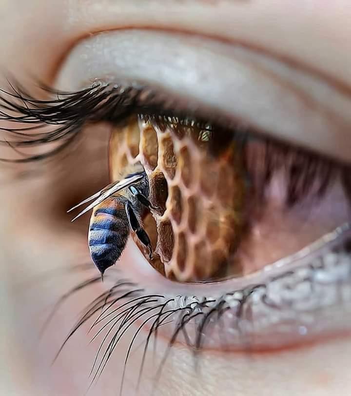 """""""عيناك العسلية تجعلني أثملُ وأغرق بها , سُبحان من جعل عيناها بحرًا من عسل"""". https://t.co/bDPkztA8mr"""