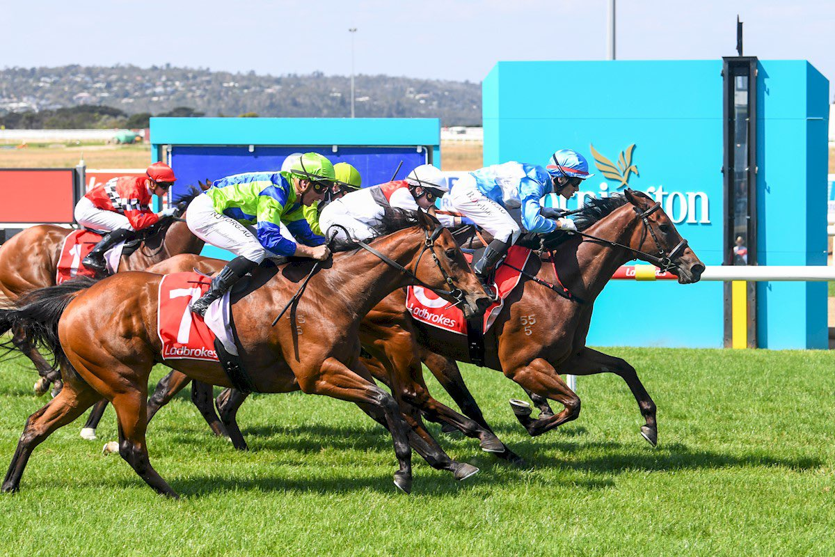 Viral bursts through a gap late to score at Mornington today for @blprebble Nice win at his second start for the stable! #winning #dannyobrienracing #moreinstore