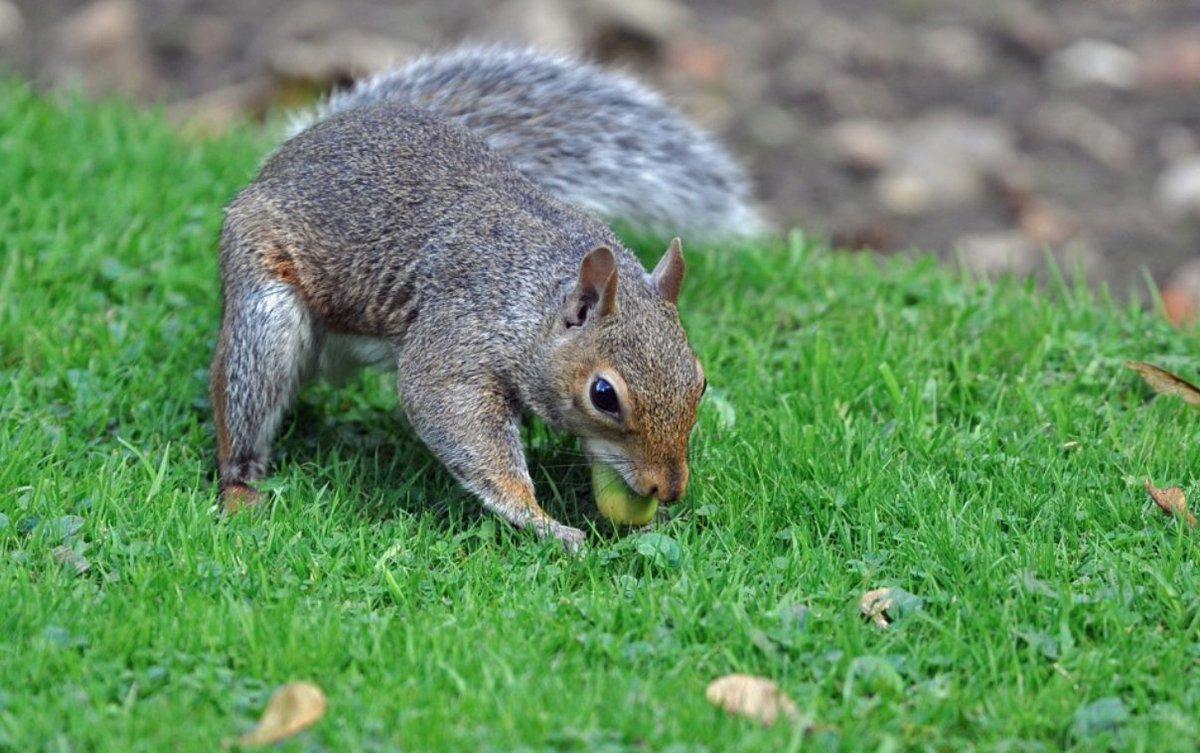 I'm nuts squirrels