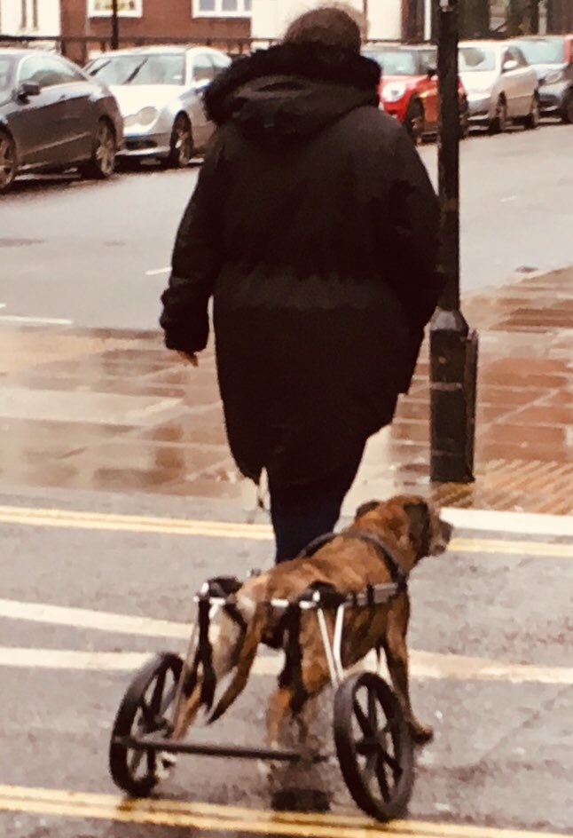 What do you do if your dog's back legs are too weak? Seen in London today.