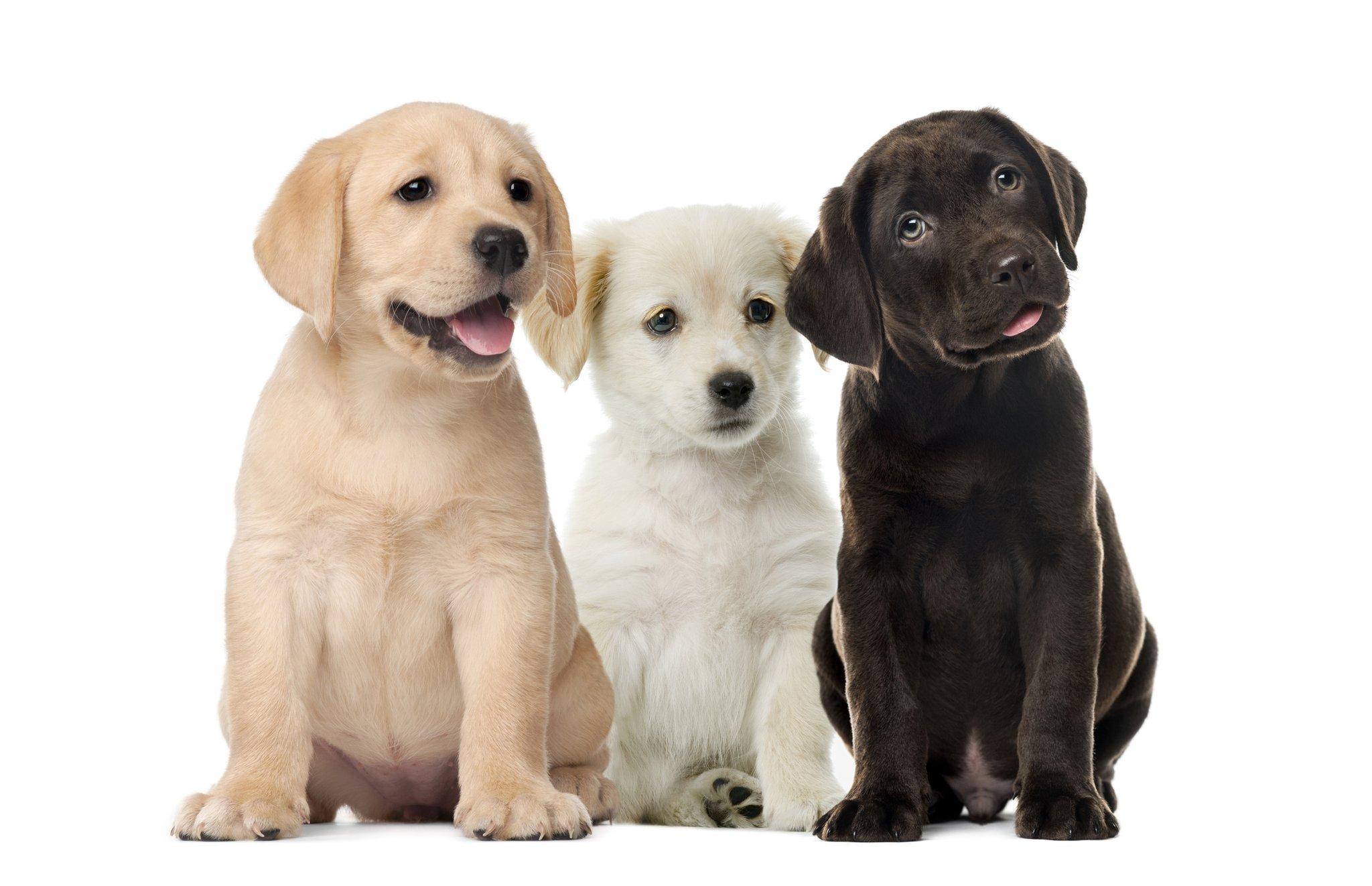 Image result for Pet Shops
