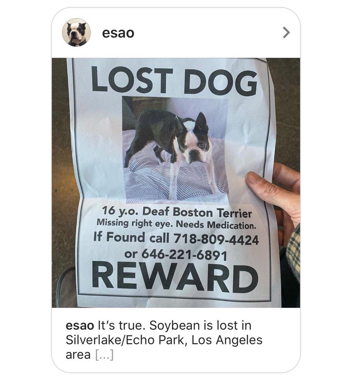 Help find a dog! #silverlake #echopark #soybean #lostdog