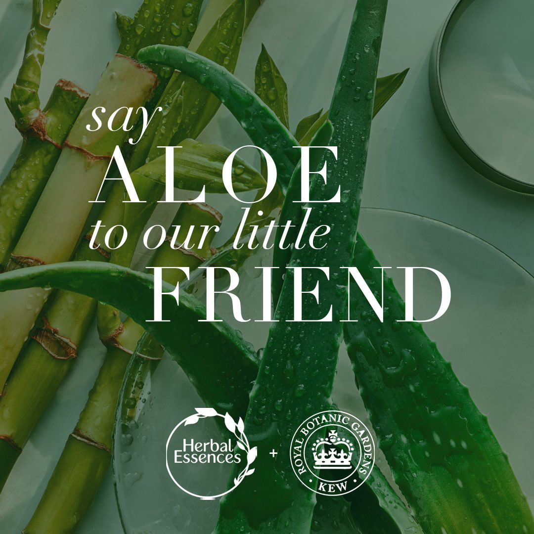 How do we love Aloe? Let us count the ways. We love it in our bio:renew shampoo. We love that it's endorsed by the Royal Botanic Gardens, Kew @Kewgardens. We love the way it looks on you. #HerbalEssences #Aloe #PlantPowerInEveryShower https://t.co/IJH4FDhqEq