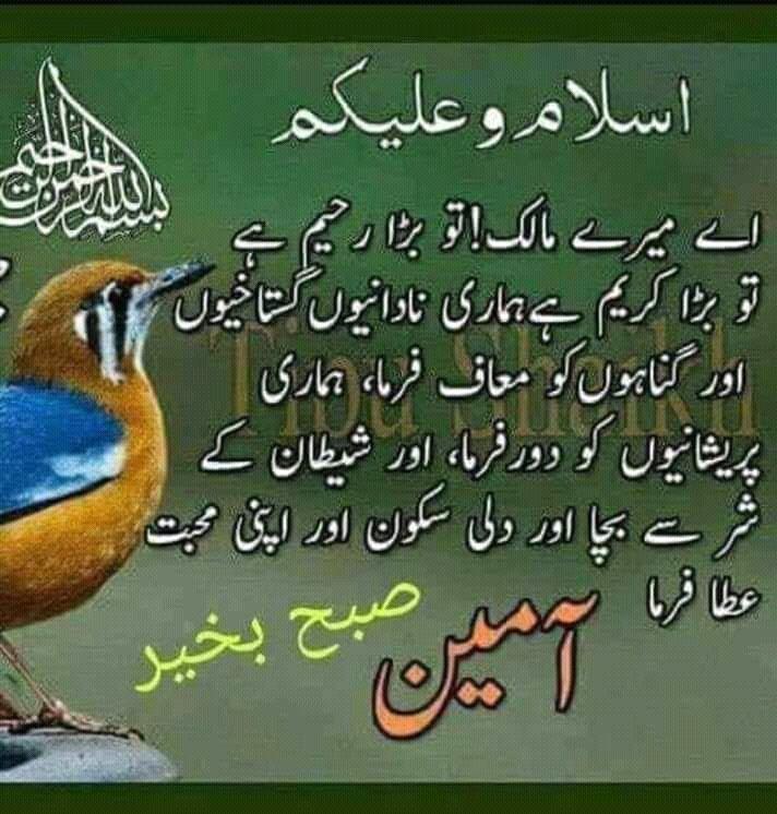 #Good #Morning #All #My #DeaR #Frinds #OmeeD #Raktta #Hun #Sab #Tek #tak #Hongy #Allah #SaB #Bhai #Log #Ko #Khush #raki https://t.co/lPmBpr5Vtk