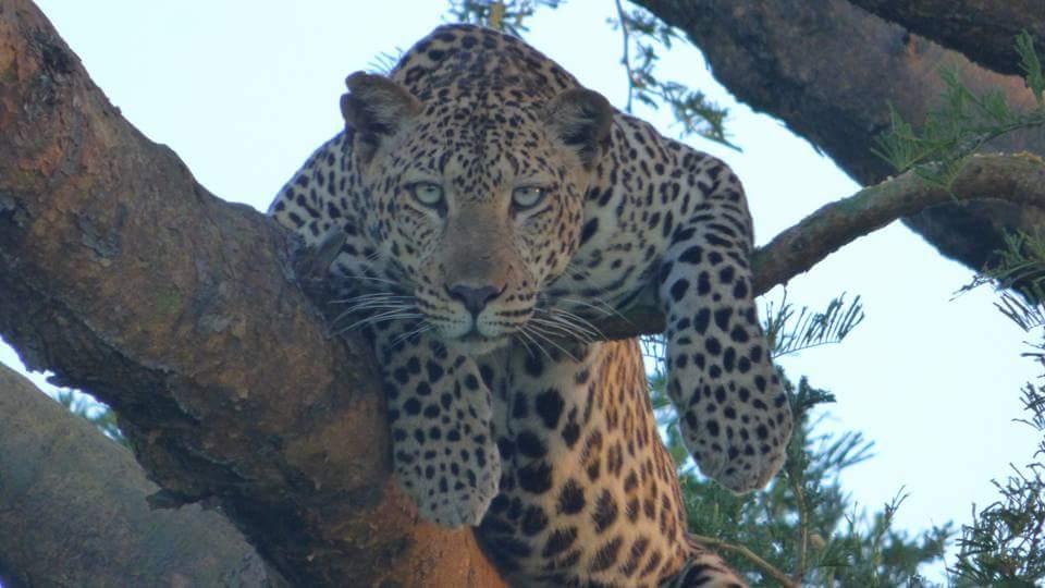 @irina3529 @bettinaschroed5 https://t.co/VGMQhhmxWn Happy day too #kabirasafaris #kabiratours #ugandasafaris #safarisuganda https://t.co/vEI58DMigc
