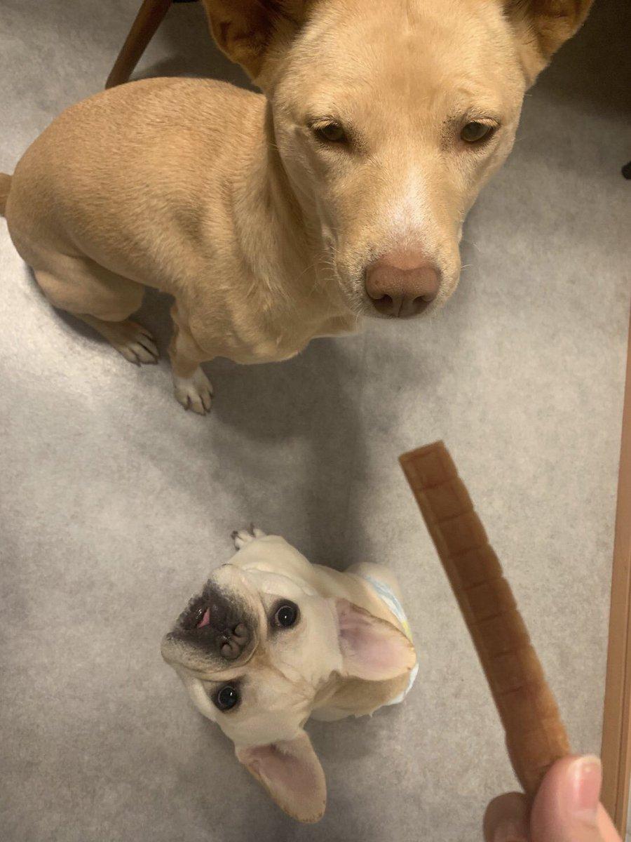 スタッフさんが送ってくれる、ともちゃんの保育園の様子お友達とも仲良くしてるみたいです 仕事の日、長い時間お留守番させるわけにはいかないのでとても助かっています(><)  #保護犬 #雑種犬 #元保護犬 #犬の保育園 pic.twitter.com/33lbjHnhRw