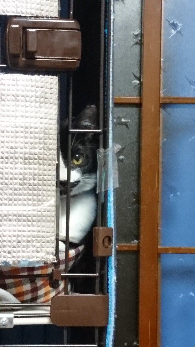 飼い猫は見た(笑)🐱 https://t.co/9eECoEMDwE