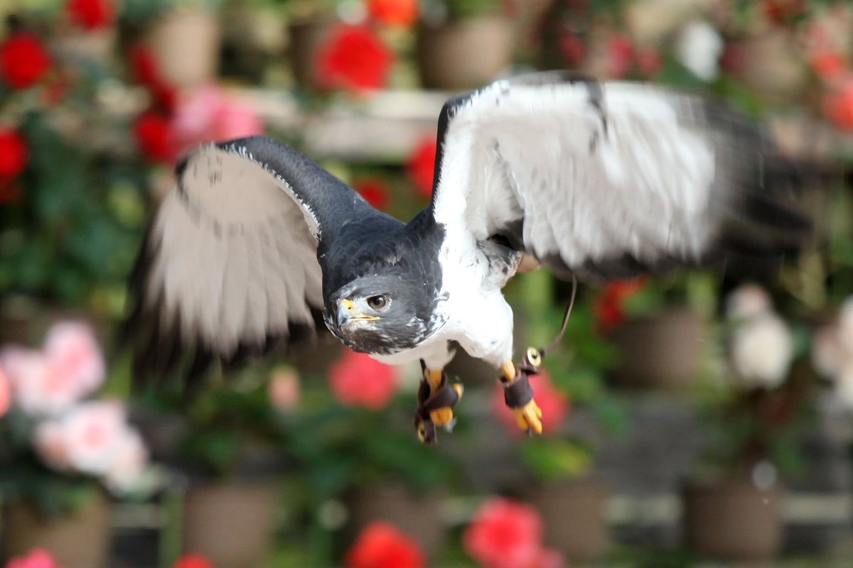 園 割引 花鳥 富士