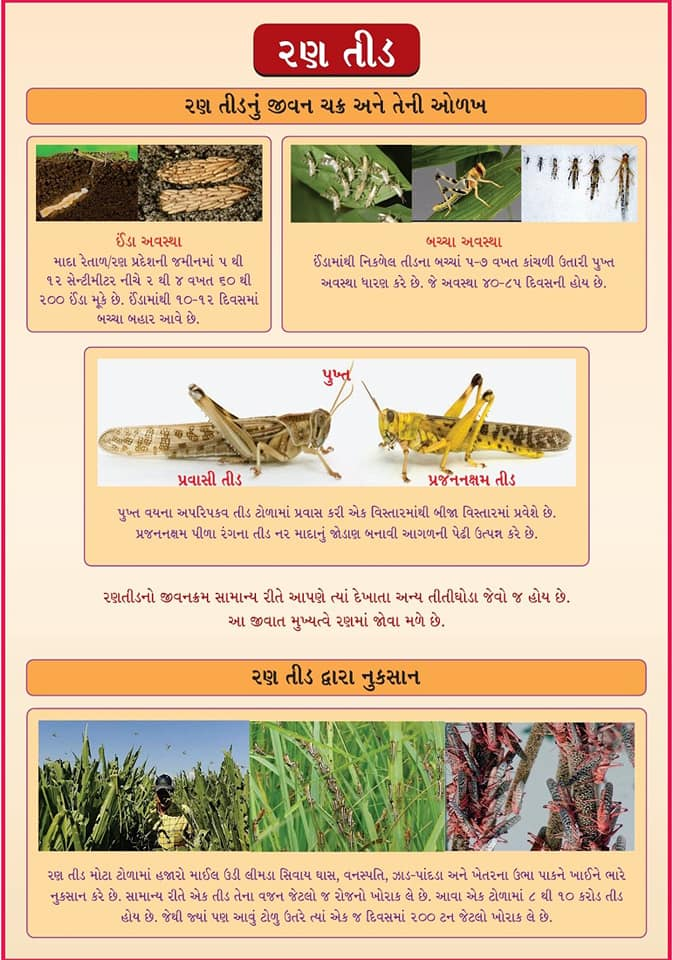 Farmers in North Gujarat trying all kind of things from creating smoke to playing DJ to get rid of Locust attack