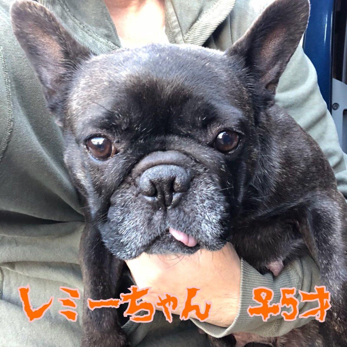 フレンチ ブルドッグ 保護 犬
