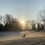Image for the Tweet beginning: Frosty morning at the club.