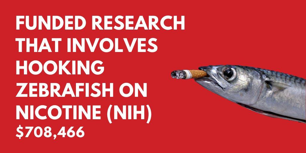 Smoking fish...Read more here: bit.ly/2POvlaa