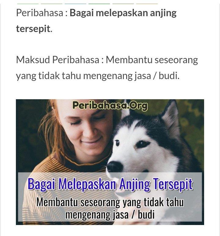 Bagai Melepaskan Anjing Tersepit Maksud