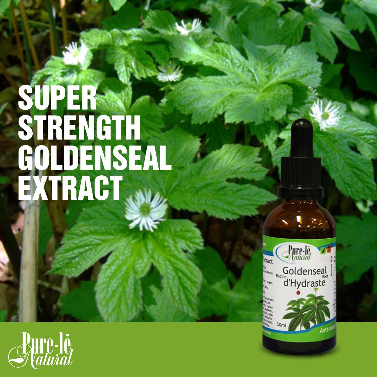 ecoidees stevia y diabetes