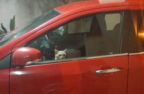 Viral kisah kucing Oyen terjebak di dalam mobil