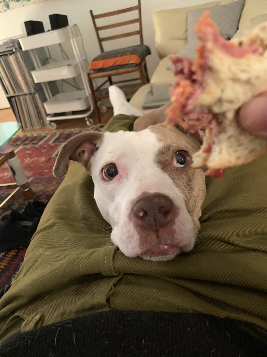 Icey can have a deli little sandwich as a treat 🥺