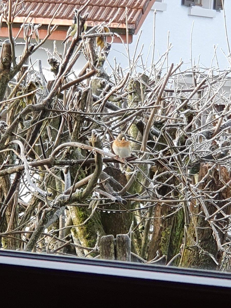 Der erste Bergfink pic.twitter.com/RpIusZyZdm
