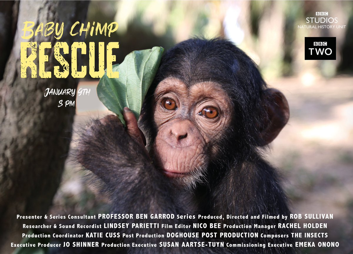 Every human should be made to watch this program so they know how to behave like civilised creatures. #humans #chimps #dogs #bbc #BabyChimpRescue