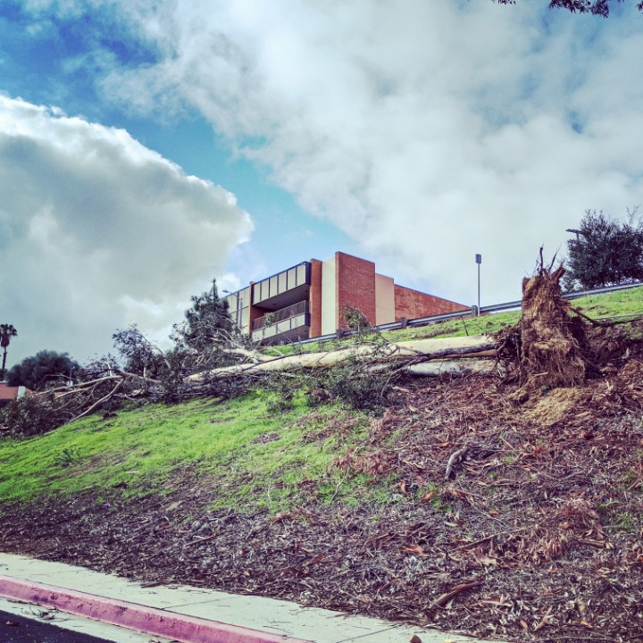 Massive eucalyptus and two companion trees felled in last night's winds at Cal State LA. Hawk in big tree next door looks dismayed. #mydayinla #stormwatch #abc7eyewitness #fox11forlife #California #cbsla #NBCLA #socal #dayafterchristmas #weathernation #KFI #sharesocal #csulapic.twitter.com/exyPZh7k95
